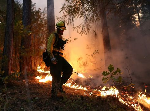 A firefighter uses a drip torch while battling the rim fire. Over 1,000 firefighters are battling the blaze that was reduced to only 2 per cent containment after it nearly tripled in size overnight.  Photograph: Justin Sullivan/Getty Images