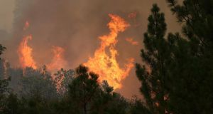 The Rim Fire consumes trees near Groveland, California yesterday. Photograph: Justin Sullivan/Getty Images