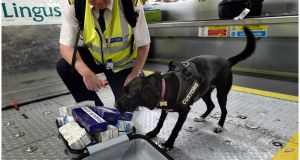 On guard: Lottie, a customs dog, finds a suitcase full of cigarettes during a random sniff through luggage at Dublin Airport. Photograph: Brenda Fitzsimons