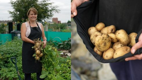 Pearse College plot holder Anne Moloney with some of the Record potatoes she grew.