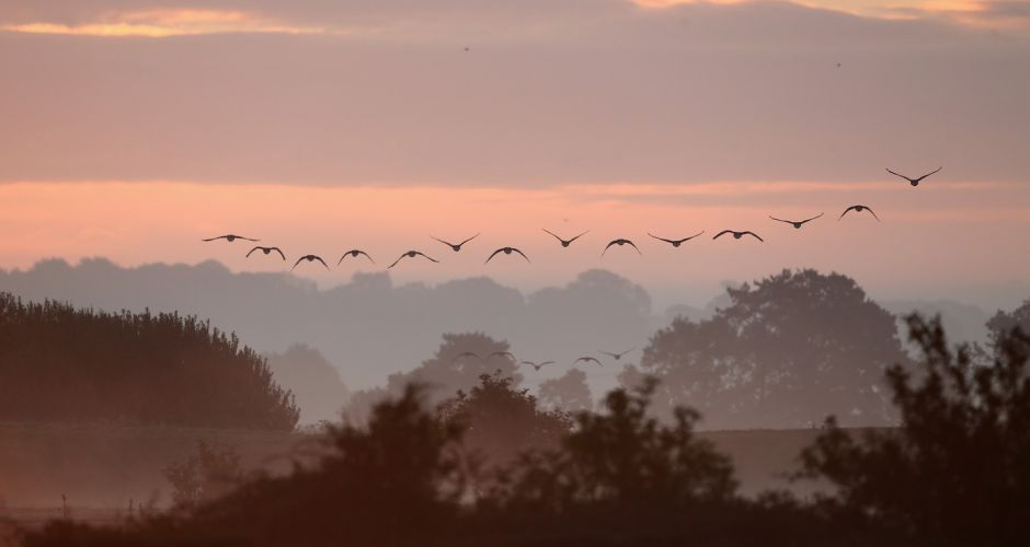 Birdwatchers flock to UK reserve