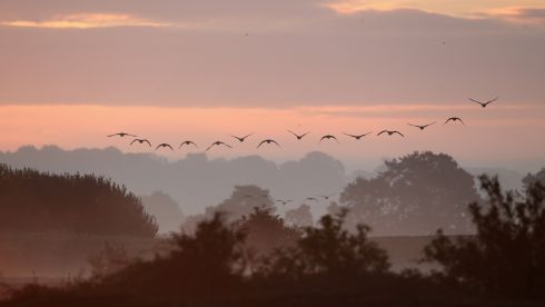 Pink-footed geese fly over the reserve at sunrise at the RSPB's Snettisham Nature reserve in England. The reserve lies on the edge of 'The Wash', one of the most important bird estuaries in the UK, supporting over 300,000 birds. A few times every year, higher than average tides force thousands of waders including Knot, Oystercatchers, Sanderlings, Black and Bar Tailed Godwit and Plover to take flight, and advance up the mud flats in search of food. The event is one of the most incredible wildlife spectacles in the UK.  Photograph: Dan Kitwood/Getty Images