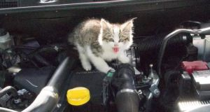 Maude the cat photographed after she was found in the engine of a rental car.
