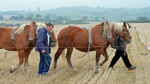 Brothers Gerry and Gerard King, from Louth, settle their horses before competing in the under-40 Horse class at the National Ploughing Championships.  Photograph: Eric Luke/The Irish Times