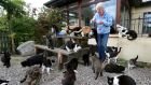 Rhona Lucas feeding the cats at An Cat Dubh Sanctuary at her home at Kylebrack, Loughrea, Co Galway. Photograph: Joe O'Shaughnessy