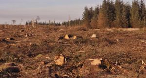 Coillte uses linear programming to make decisions about when and where to cut trees to maximise long-term benefits