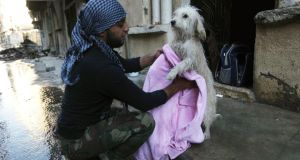 A Free Syrian Army fighter in Deir al-Zor  dries a dog after giving it a wash. Photograph: Khalil Ashawi