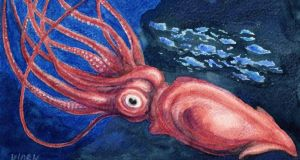 Dux redux: the giant squid has its own Darwin Centre tank. Illustration: Michael Viney