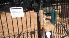 A padlocked chain on a gate interrupted the daily after-school ritual of playing in one of Lincoln Park's two playgrounds during the shut-down...until an unlocked gate was found.