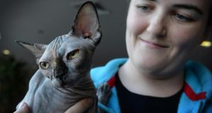 Aimee Henson, from Galway, with Victoria, a one-year-old Sphynx. Photograph: Dara Mac Dónaill