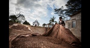Aela De Deus, a coffee farmer from East Timor's Emera distric, prepares dried coffee parchement before it is transfred into bags for transport to Dili. Photograph: Cedric Arnold/realfeatures.com
