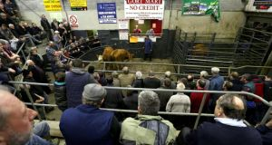 The auction underway at Gort Mart. Photograph: Joe O'Shaughnessy
