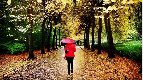 Here is a gallery of some of our favourite Irish Times photos from the last week. On Monday Bryan O'Brien spotted some great colour amid rain and autumnal leaves in St Stephen's Green Photograph: Bryan O'Brien / The Irish Times