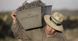 Video: Master of Wine offers taste of Argentina