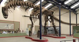 The 40m  skeleton of an Argentinosaurus huinculensis, on display at the Museo Municipal Carmen Funes in Argentina, was digitally reconstructed to examine how the dinosaur walked and ran. Photograph: Dr Bill Sellers, the University of Manchester