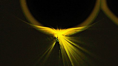 Phoenix: An ultraviolet laser beam was focused on the bottom of polymer micro-ring resulting in a blast of golden light flooding the exciting spot. Image: Jian-Yao Zheng // Trinity College Dublin