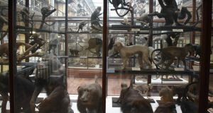 Dead Zoo: the title poem takes its name from the nickname of the Natural History Museum and begins by replicating its familiar display. Photograph: Frank Miller