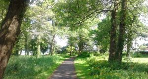 Wildlife area: the Grove, developed by the Tidy Towns team in Loughrea, Co Galway. Photograph: Paddy Woodworth