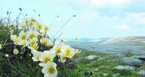 The Burren in Co Clare: why should we be destroying our most beautiful landscapes by erecting unnecessary and ugly wire fencing?