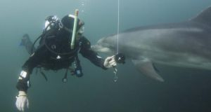 Underwater adventures: diving with the Doolin dolphin. Photograph:  Martin Kiely