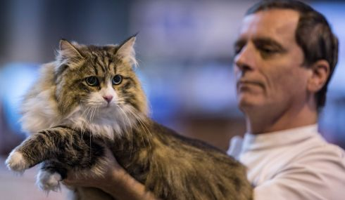 How dare you judge me? A cat has a cold eye cast over it. Photograph: Matt Cardy/Getty Images