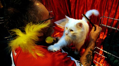Darren Handy with Sunny Blue, a Norwegian Forest Cat, before the judging.  Photograph: Rui Vieira/PA Wire