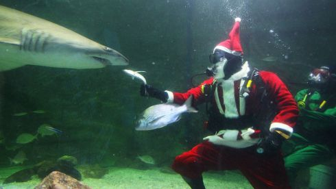 Santa Claus feeds the sharks during a visit to the Manly SEA LIFE Sanctuary in Sydney, Australia on December 18, 2013. Photograph: Lisa Maree Williams/Getty Images