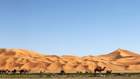 Camels graze in the desert during the 19th Ghat Festival of Culture and Tourism. Photograph: Esam Omran Al-Fetori/Reuters