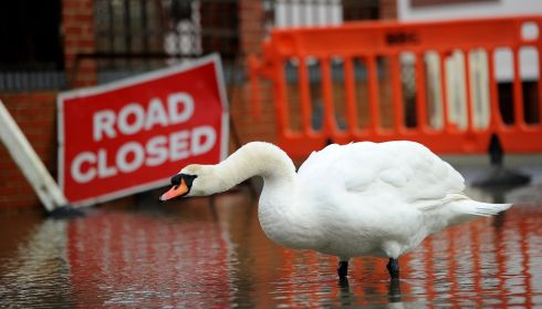 A swan wades around the flood water from the river Stour outside Iford Bridge Home Park in Bournemouth. Residents from the Iford Bridge Home Park, which overlooks the river Stour, had to be evacuated overnight due to warnings of possible flooding because of the wind and high tides . Photograp: Andrew Matthews/PA Wire