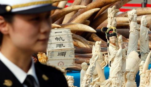 A Chinese police officer stands guard next to ivory and intricate ivory sculptures before they are destroyed in Dongguan, Guangdong province on January 6th, 2014. The Chinese said they were crushing 6.2 tonnes of confiscated ivory  in the first such public destruction of any part of its stockpile, after the country's fitful enforcement efforts led experts to question its commitment to stamping out illicit ivory smuggling. Photograph: Alex Lee/Reuters