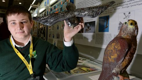 Lee Warner, Scoil Ruain, Tipperary, with his project, Saving The Hen Harrier. Photograph: Eric Luke/The Irish Times