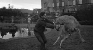 Lord Altamont wrestles with a llama from the zoo in 1972