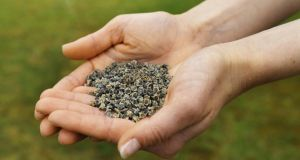 Helping hands: Irish Seed Savers hopes that crowd-funding can help it survive. Photograph: Stockbyte/Getty