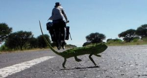 Taking on the road: Derek Cullen and a local lizard in Botswana. Cullen is cycling solo through Africa for charity, taking in South Africa, Namibia, Botswana, Zimbabwe, Zamibia, Malawi, Tanzania and Kenya.