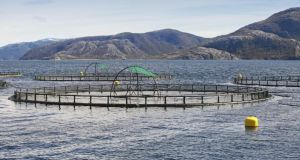 "Fish farm with round cages for salmon growing. Marine Harvest says it halted harvesting of salmon in January and February ""in an effort to grow the fish""."