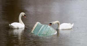 Swans with a submerged boat on the flooded banks of the River Thames in Chertsey, Surrey, yesterday. Photograph: Steve Parsons/PA Wire
