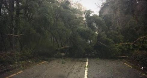 A tree is seen blocking the R571 Castletown to Berehaven Road near Kenmare town in Co Kerry today. Photograph: David Morrissey