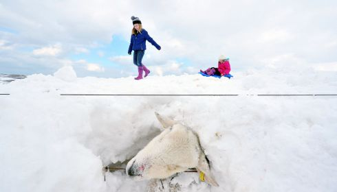 Beautiful cruel snow:  Children enjoying the snow, unaware that sheep are buried beneath them, after a severe storm hit the Glens of Antrim. Photograph: Justin Kernoghan/JKFOTOPRESS (1st place in Nature & Environment)