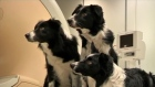 According to Hungarian researchers, dogs can understand how we're feeling. The Hungarian Academy of Sciences have compared canine brains to those of humans, and found evidence that dogs are highly  sensitive to their owners' feelings. Video: Reuters