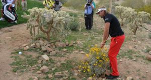 Victor Dubuisson of France chips from a cactus on the 20th hole during the championship match of the WGC-Accenture Match Play Championship at Dove Mountain, Arizona, on February 23rd, 2014. Photograph: Stuart Franklin/Getty Images