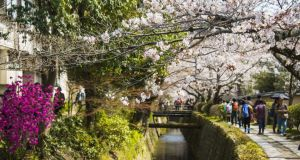 Cherry blossom in the Philosopher's Walk, Kyoto
