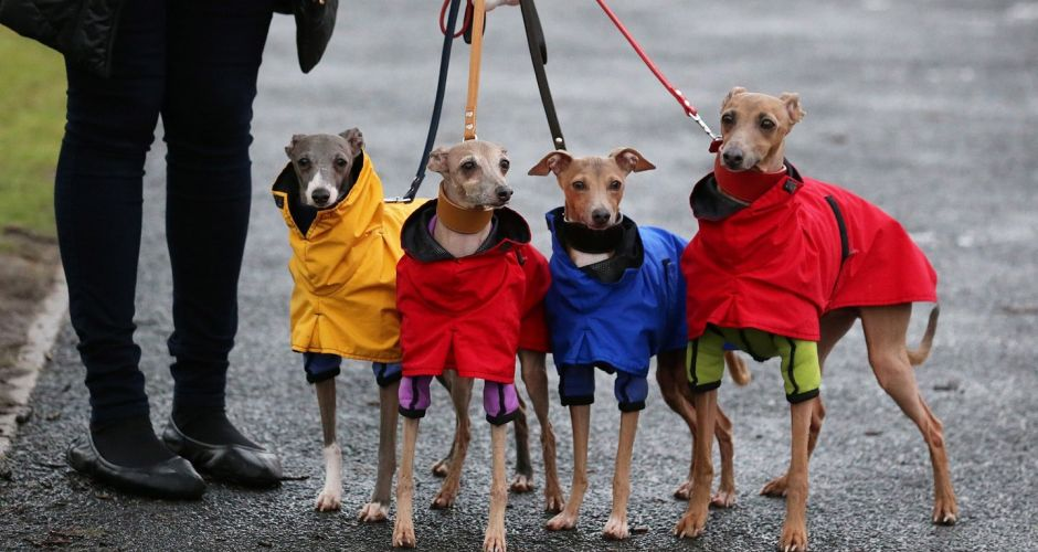 Hot doggies make the running at Crufts