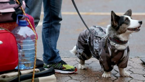 An expectant look. Could be a dog with a sense of entitlement. Photograph: Matt Cardy/Getty Images