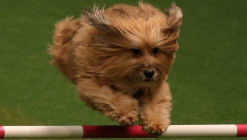 Up and over during the Rescue Dog Agility show. Photograph: Matt Cardy/Getty Images