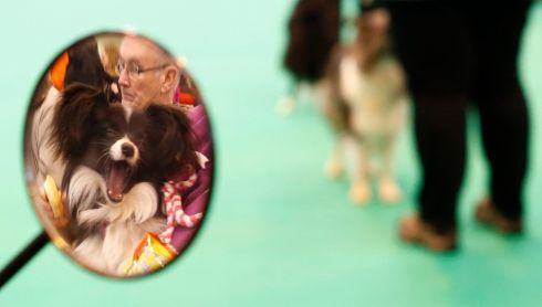 That's what I think of judgment day. A dog yawns amid the Crufts proceedings. Photograph: Darren Staples/Reuters