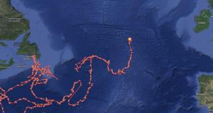 Tracking points showing the movements of a great white shark which is crossing the Atlantic. Graphic: http://www.ocearch.org/