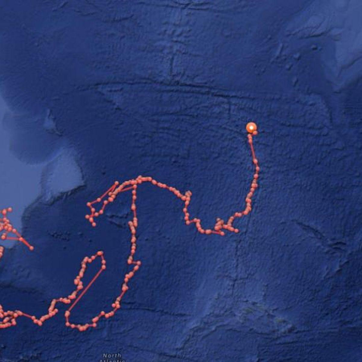 Great white shark tracked 1,200kms off Irish coast