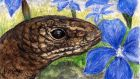 Legless lizard: a slow-worm among gentians in the Burren. Illustration: Michael Viney