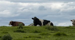 Every time horse DNA is found in beef burgers, the Irish agri-food sector takes a hit