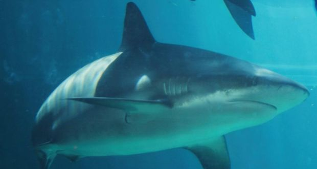 Girl (10) stable after shark attack in Australia